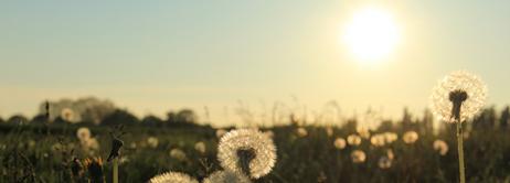 Leonard Cohen – Sunlit dandelions