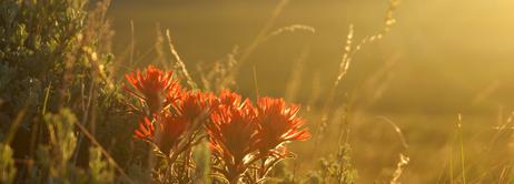 David Wagoner – Sunlit flowers